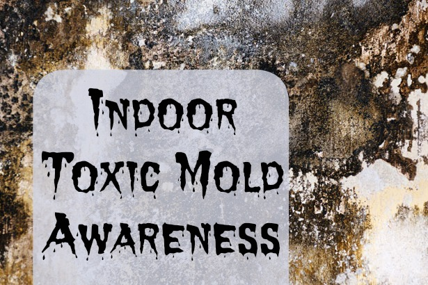 How to deal with toxic mold?